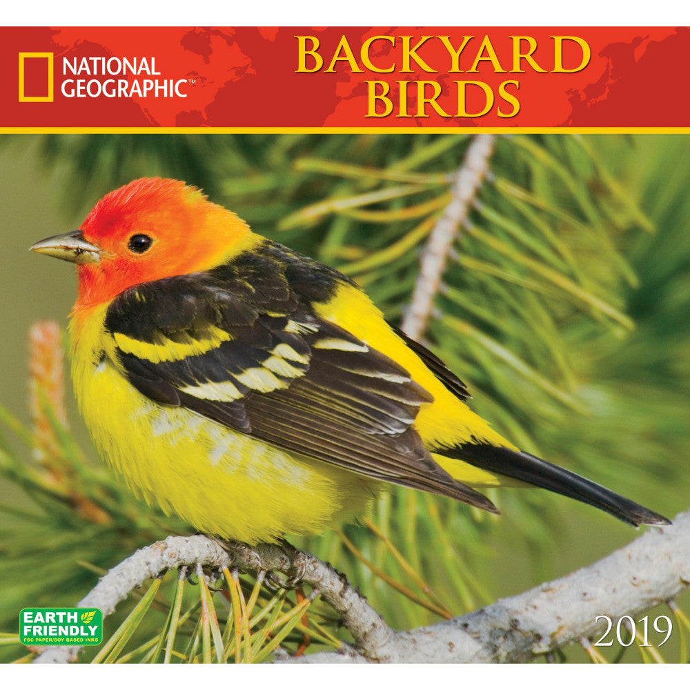 national geographic backyard birds 2019 wall calendar
