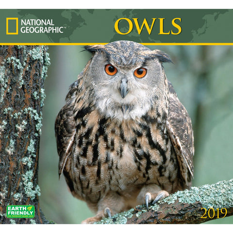 National Geographic Owls 2019 Calendar