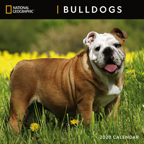 National Geographic Bulldogs 2020 Calendar