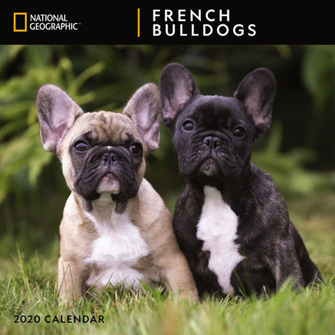 National Geographic French Bulldogs 2020 Calendar