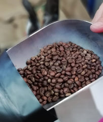 beautiful medium roast robusta coffee beans tipped into a bag
