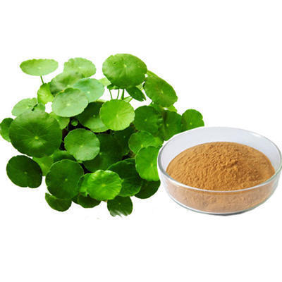 bacopa nootropic extract