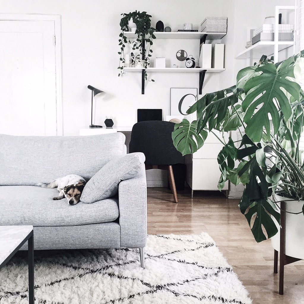 plant - accessories - living- room