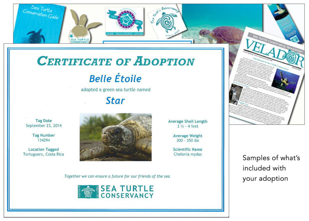 Sea Turtle Adoption