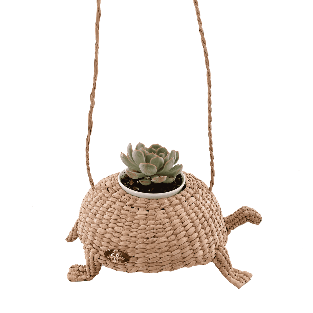 Teddy the Straw Turtle with Succulents - Josephine Alexander Collective