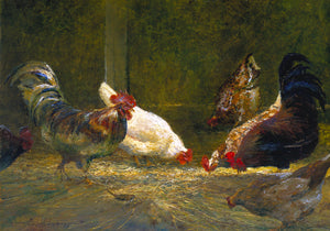 'Pecking Order.' Chickens