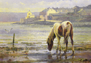 A pony at Skern. 'On reflection.'