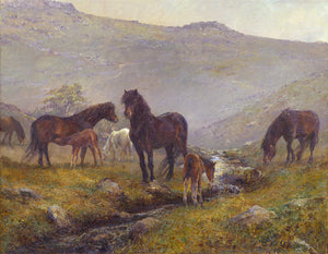 Dartmoor ponies. 'Her first butterfly.'