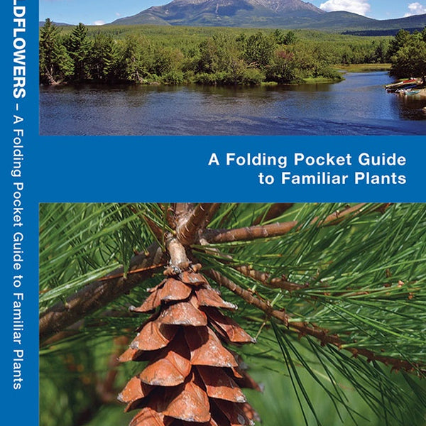 Maine Trees and Wildflowers Pocket Reference Guide