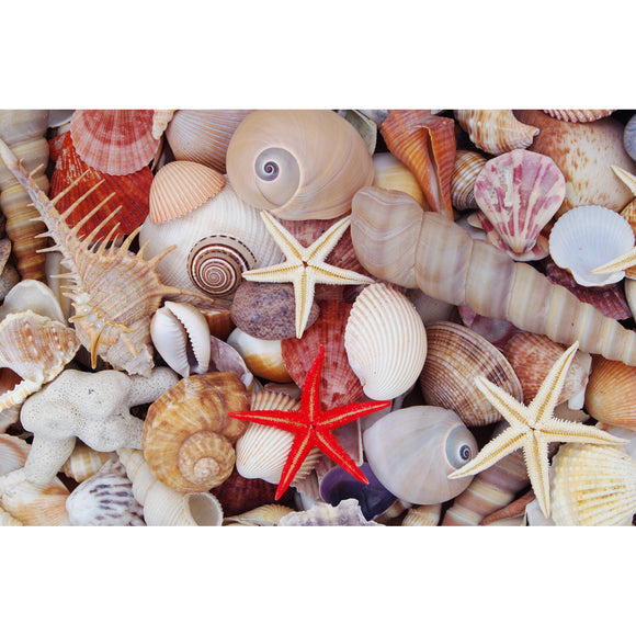 Seashell Treasures 1000 Piece Puzzle