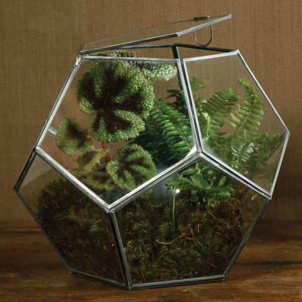 Pierre Faceted Terrarium - Lrg - Zinc