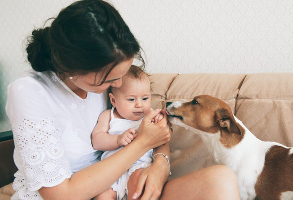 9 Important Steps for Introducing Dog to Baby