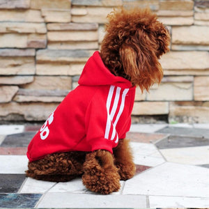 Autumn clothes for dogs