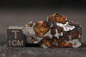 Molong Pallasite Meteorite - 9.2g End Cut