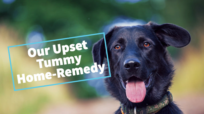 Our upset doggy tummy home remedy