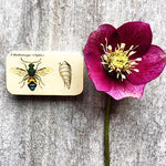 Entomology Notions Box, Small