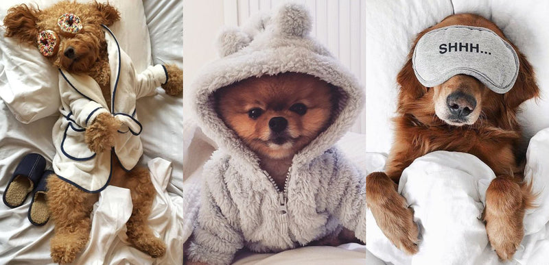 11 Fashionable Ways to Pamper your Pet