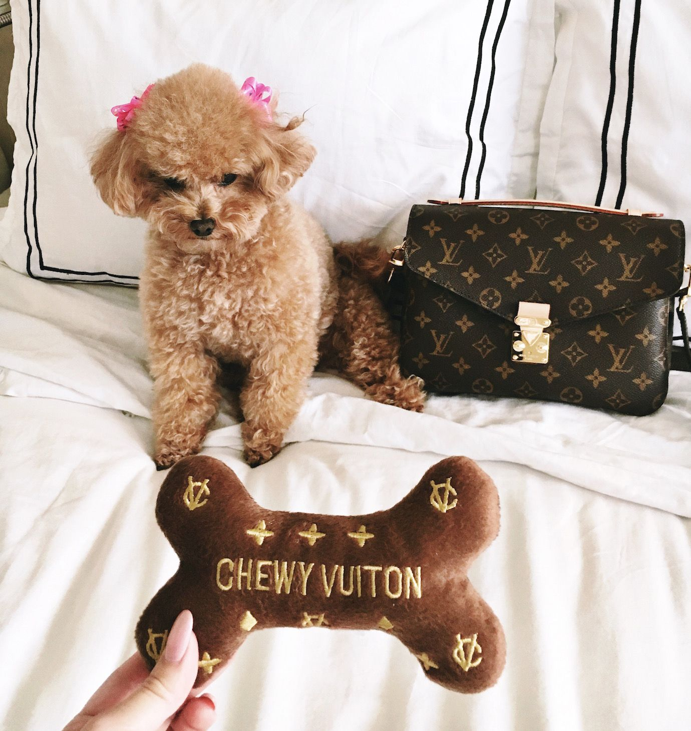 Louis Vuitton and puppy