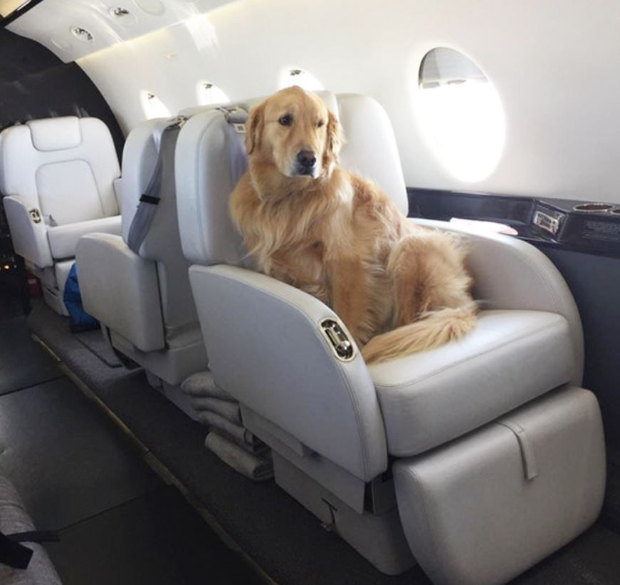 Dog on Private Jet