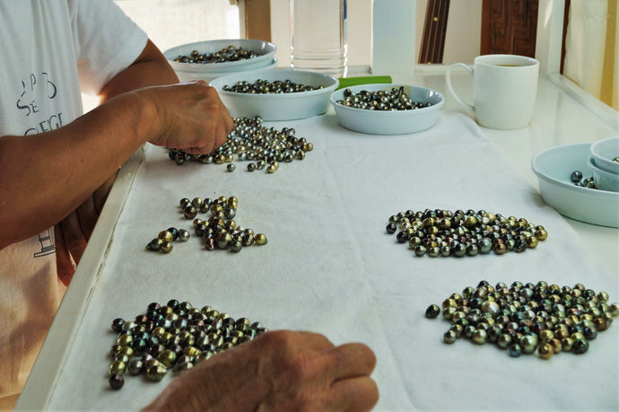 Anticipation and Elation: The Happy Pearl Farmers of Fiji