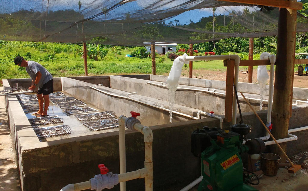 The Giant Clam Factory, Taveuni, Fiji