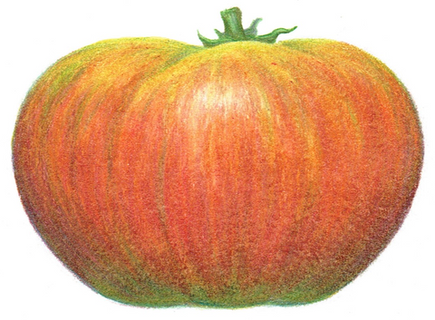 large tomato - Ananas Noire