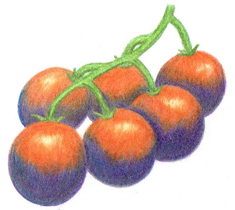 cherry tomato - Blue Berries