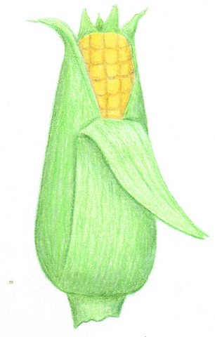corn - Orchard Baby, 60 grams