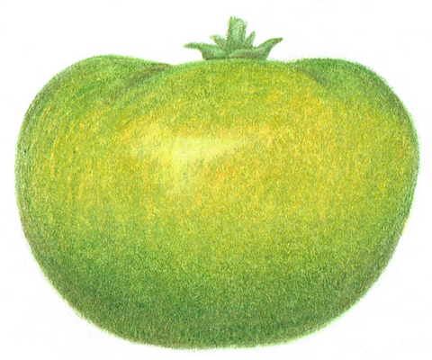 large tomato - Grub's Mystery Green