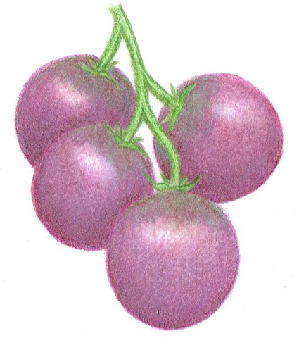 cherry tomato - Haley's Purple Comet, 1 gram