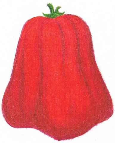 large tomato - Italian Red Pear, 1 gram