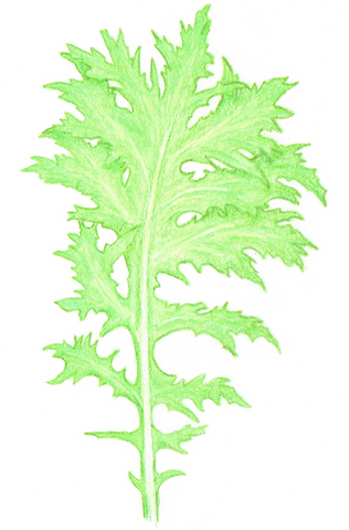 mustard greens - Wasabina