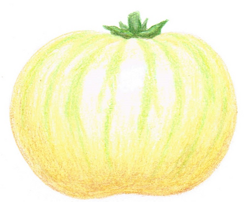 medium tomato - White Zebra