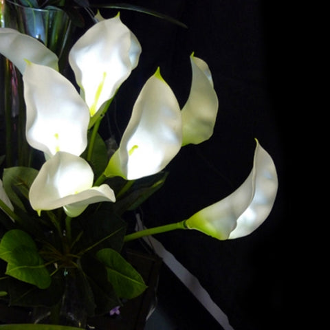 LED Lighted Lighted Rose Blossoms, 36 in., Battery Operated, WHITE