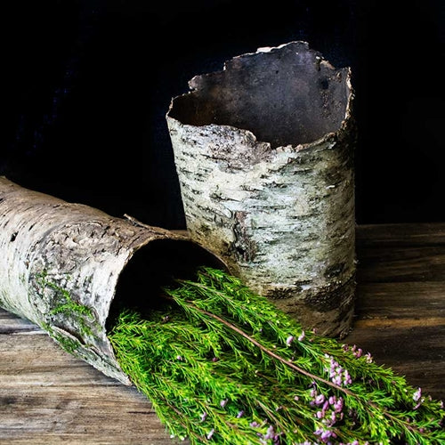 Natural Birch Tube, Rustic Tree Bark, 6 to 13 inches tall