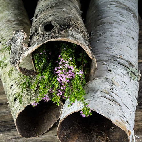 Natural Birch Tube, Rustic Tree Bark, 18 to 28 inches tall