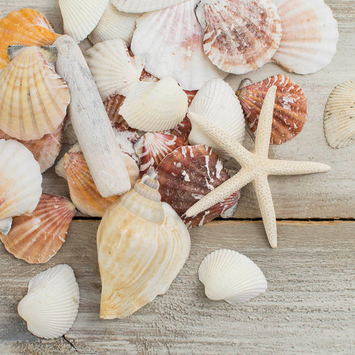 Vase Filler, Various Natural Beach Seashells Mix, 2.85 lb. bag, White