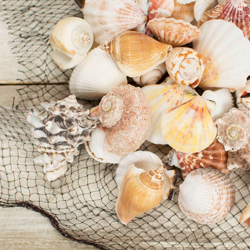 Vase Filler, Natural Beach Seashells Mix, 2.2 lb. bag, Multi Color