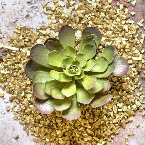 Echeveria, Succulent Rosette, Realistic Flower, 5 inch Bloom, Green