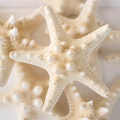 Knobby Starfish Vase Filler, Natural Seastars, Cream, 12 Pack