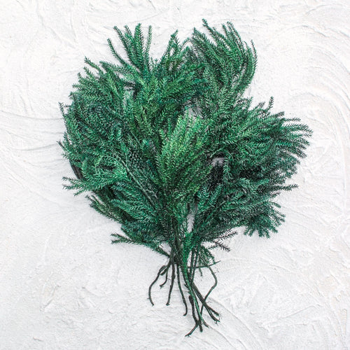 Natural Princess Pine Stems, Lycopodium Sprigs, 2 oz, Green, 25 pcs.
