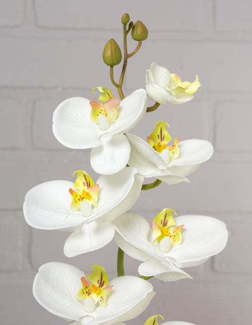 One Butterfly Phalaenopsis Orchid Spray with White Flowers and a Bendable Stem