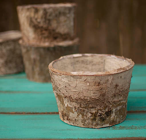 One dozen 6.5 inch diamter round birch planters