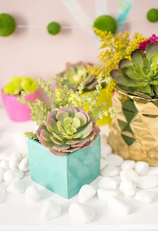 Arrange succulents and sprigs in this petite square vase for fresh minimalist design. Add white river rock table scatter and other square and geometric vases to complete your look.
