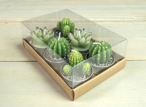 Green Succulent Flower And Green Cactus Set Of 6