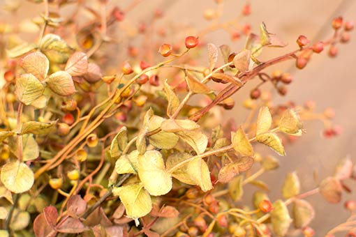 These sprigs will stay forever in bloom year round through your cafe and restaurant designs.