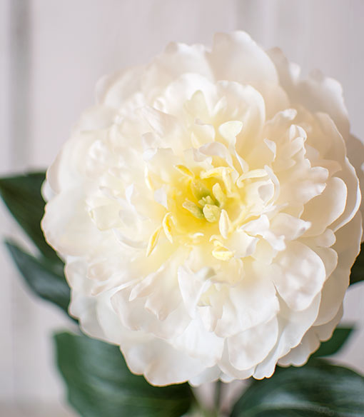 Peony, Single Bloom on Stem, Realistic Flower, 17 inches tall, White