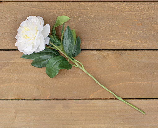 Single Bright White Peony Bloom With Leaves, 17 inches