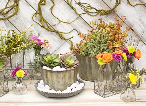 Design a garden of possibilities with our succulents collection in weathered tin accents and glass delicacies.