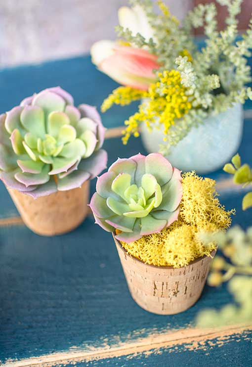 Combine this succulent with our yellow moss filler and cork vase for a statement wedding centerpiece.